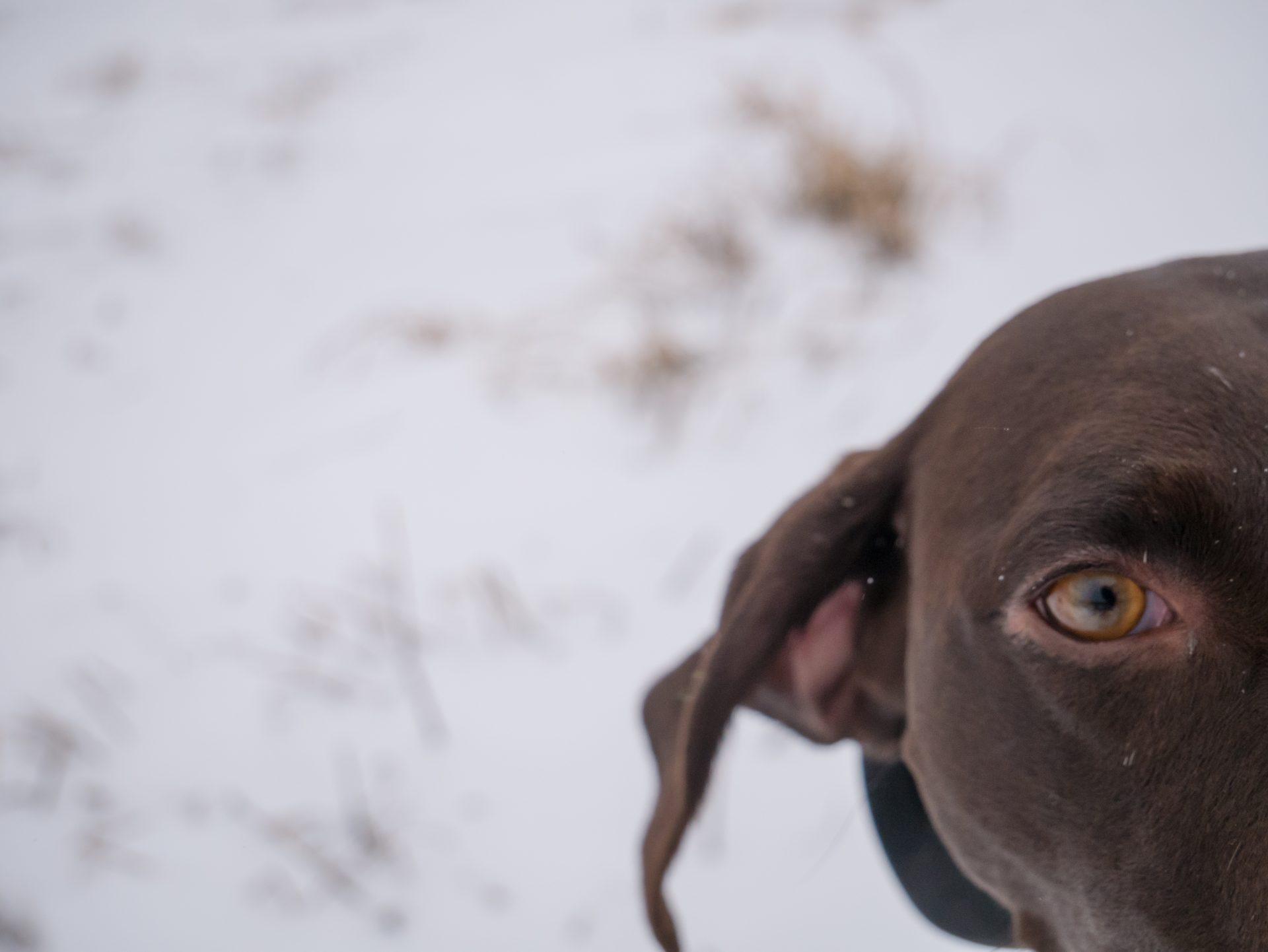 Luka at the Dog Park